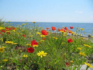 Весна на Афоне